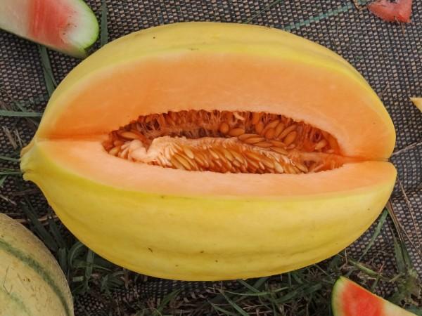 Bio Mango-Melone