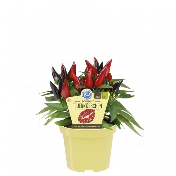Bio Chili Feuerküsschen