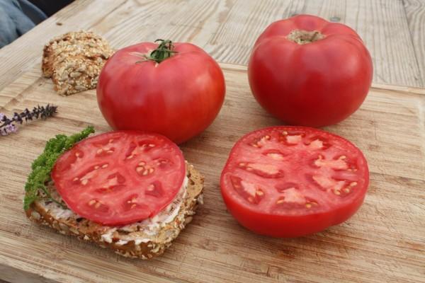 Bio Salat-Tomate 'Rose Crush'